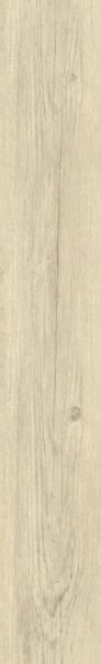 24115 Borovice Polární