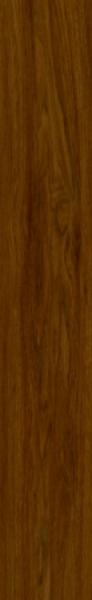 24866 Dub Tasmánský